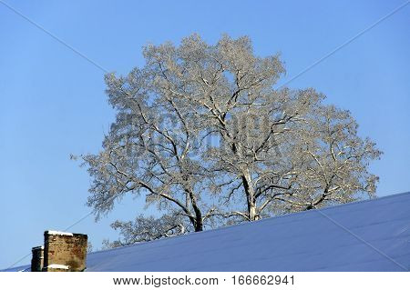 The snow-covered roof of residental house and old snowy acacia against the blue sky at winter.