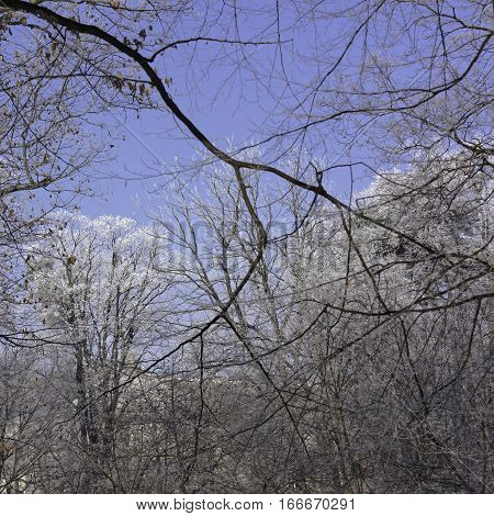 Snowy branches on blue sky winter generic background