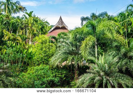 branches of palm trees with coconuts. palm trees in Thailand. branches of palm trees and coconuts green.