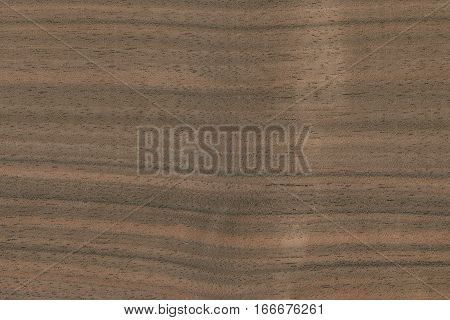 Walnut- French (Juglans regia) Europe. Showing the wood grain and pattern typical of this tree.