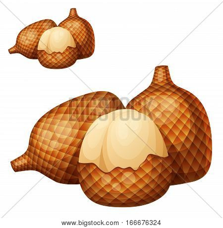 Salak fruit. Cartoon vector icon isolated on white background. Series of food and drink and ingredients for cooking.
