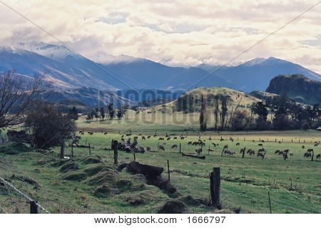 West Wanaka Otago Nz