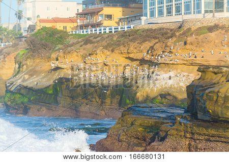 Seagulls on La Jolla cliffs at sunset California