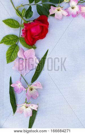 Beautiful Spring frame of flowers on gray background