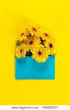 Bunch of fresh beautiful yellow gerbers in blue envelope on yellow background. Top view. Flat lay. Spring concept.