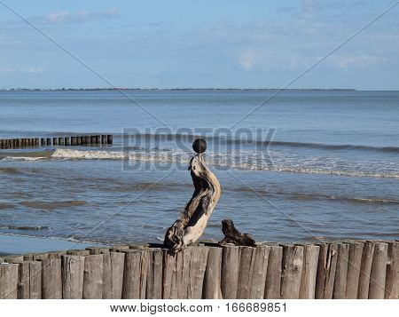 Anharbour seal - wooden scuplture - on the beach