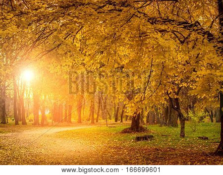 Colorful foliage in the autumn park. Golden leaves on branch, autumn wood with sun rays, beautiful landscape. Autumn. Fall. Autumnal Park. Autumn Trees and Leaves.