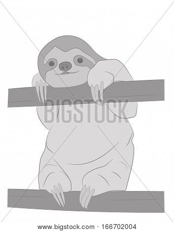 sloth picture on a white background. vector illustration.