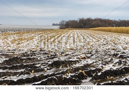 Landscape with half-harvested maize field at late autumnal season in Ukraine