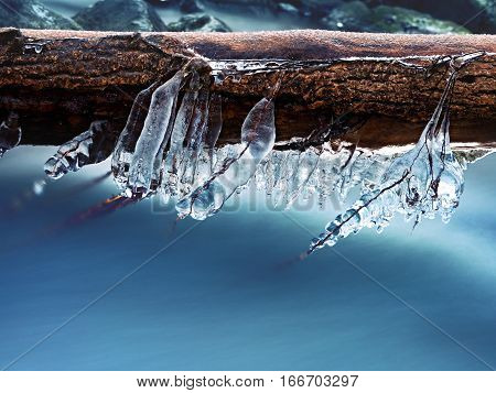 Icicles Hang On Twigs And Icy Bark Above Chilli Rapid Stream.