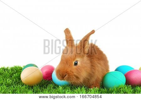 Cute funny rabbit and colorful eggs on green grass against white background
