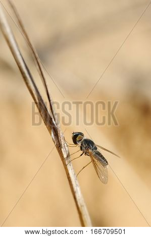 Closeup of the nature of Israel - black fly on a branch