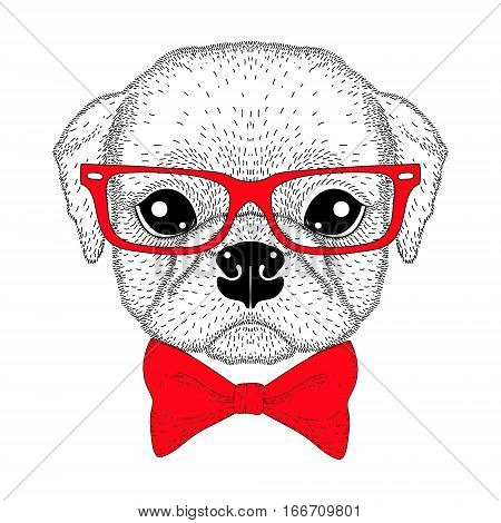 Cute pug boy portrait with bow tie, hipster glasses. Hand drawn dog face, anthropomorphic fashion animal cartoon illustration for t-shirt print, kids greeting card, intitation for pets party.