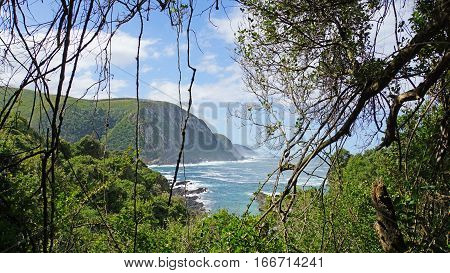 View through the virgin forest to the mouth of the Storms River into the Indian Ocean in the Tsitsikamma National Park in South Africa, rocky coast and lush vegetation