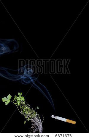 tobacco smoke kills plants smoking kills injury