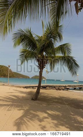 The palm trees on Caribbean beach Martinique island French West Indies.