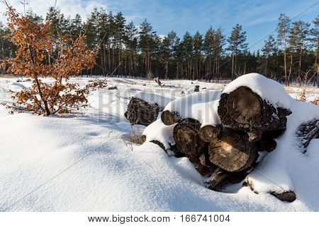 old woods under snow on autumn tree background