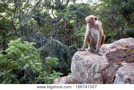monkey on stone in jungle