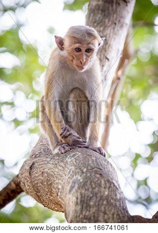 small monkey on tree stem in jungle