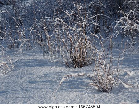 Bushes covered in snow at Ochoco Reservoir in Central Oregon on a winter day.