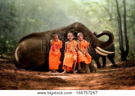 smiling novice monk Thailand and big elephant with forest background novice monk Thailand sit on elephant's knee smiling and laughing happily