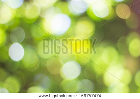 Green bokeh on nature defocus art abstract blur background natural bokeh blurred bokeh soft green natural bokeh background circular green bokeh background