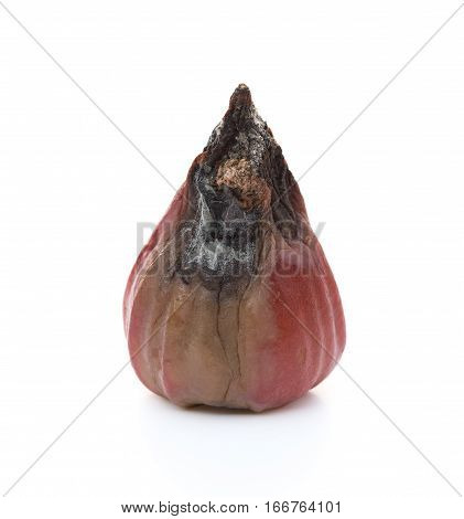 rotten wax apple on a white background