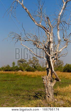 Moremi Game Reserve, Okavango Delta, Africa Botswana
