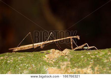 Praying Mantis On Leaf, Madagascar