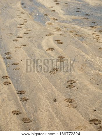Closeup of riverbed with leopard pawprints, Kidepo river in Uganda