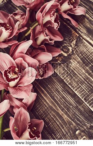 Orchid flowers on the vintage wooden background