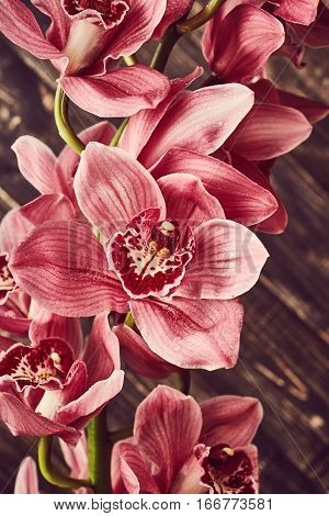 Beautiful pink orchid flowers on wooden background