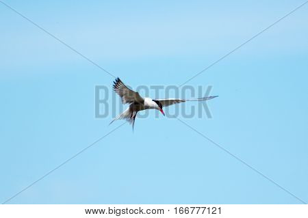 A Seagull bird in the blue sky