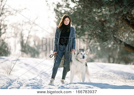 Girl with dog Malamute on walk in winter forest. She stands near pines and keeps the dog on leash.