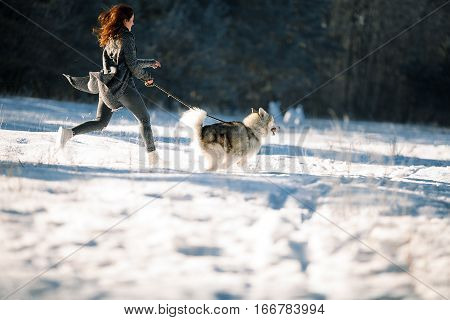 Girl with dog Malamute on walk in winter forest. She runs with dog.
