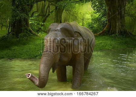 Elephant in a rain forest river of Thailand