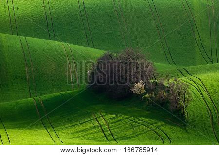 Amazing Detail Scenery At South Moravian Field During Spring, Czech Republic.