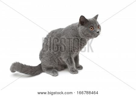 kitten isolated on white background. horizontal photo.