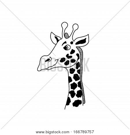 Vector giraffe head. Cartoon illustration of giraffe