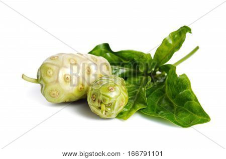 Noni Exotic Tropical Fruit Isolated On The White
