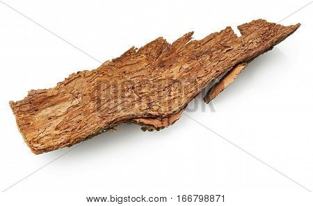 Part of bark tree isolated on white background