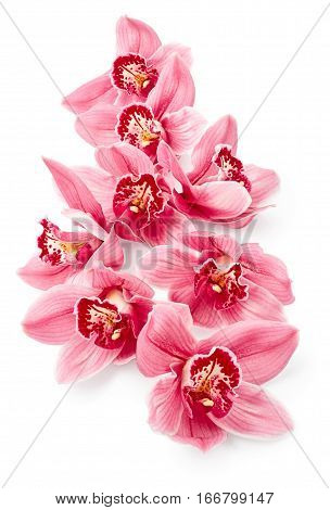 Beautiful pink orchid flowers isolated on white background