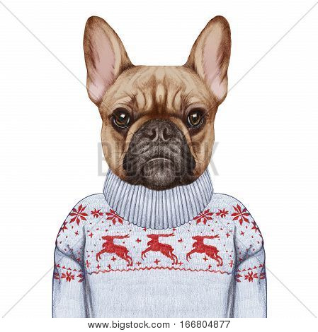 Animals as a human. French Bulldog in down vest and sweater. Hand-drawn illustration, digitally colored.
