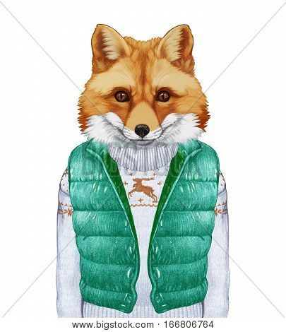 Animals as a human. Fox in down vest and sweater. Hand-drawn illustration, digitally colored.