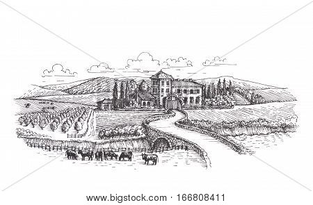 Farm, agriculture or vineyards sketch isolated on white background