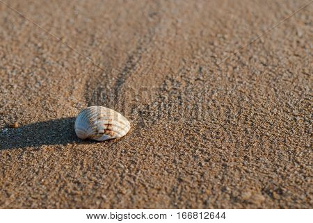 Algarve seashell, seashell on the sand, seashell on the beach