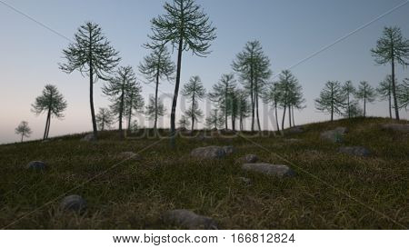 3d illustration of the araucaria grove