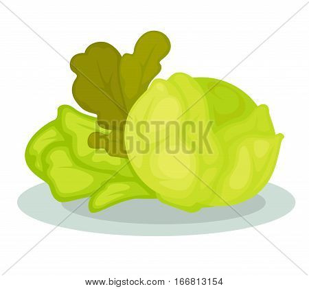 Green healthy vegetables collection. Icon with organic vegetarian food salad cabbage. Bloating and gas producing product set. Vector illustration isolated on white. Design element in cartoon style