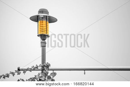 Yellow shining overgrown streetlamp in a black and white scenery