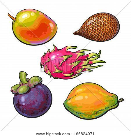 Whole mango, papaya, mangosteen, salak, pitaya tropical fruit, sketch vector illustration isolated on white background. Realistic hand drawing of mango, papaya, mangosteen, snake fruit, dragon fruit